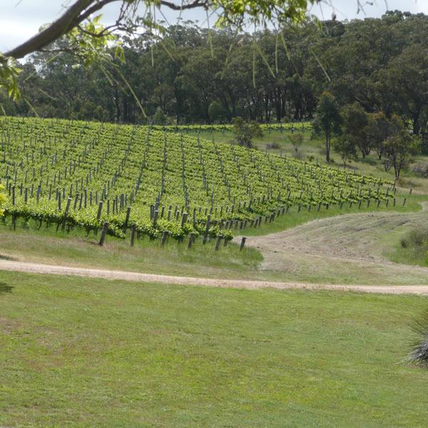 Tynan Road Wines